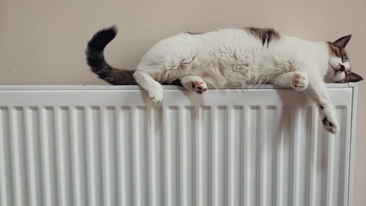 Cat lounging on radiator. Photo by he gong on Unsplash